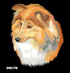 sheltie colorful portrait vector image vector image