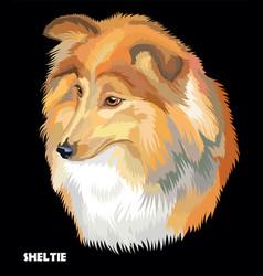 Sheltie colorful portrait vector