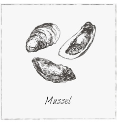 Mussel hand drawn sketch vector