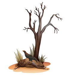 A dying tree with a wild bird vector