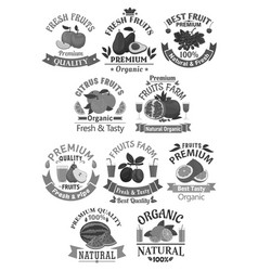 Fruits icons for farm store or juice label vector