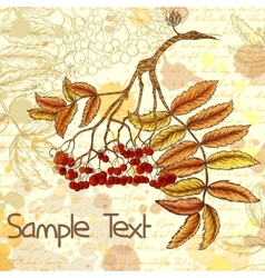 Autumn grungy background with hand-drawn rowan vector image vector image