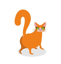 Red cat ass happy pet thick animal back vector