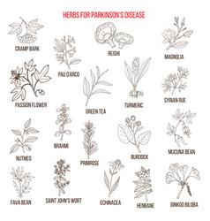 Best natural herbs for parkinson disease vector