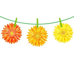 Gerbers Flowers With Clothespegs vector image vector image