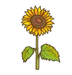 Sunflower cartoon floral drawing vector