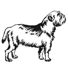 Decorative standing portrait of dog griffon belge vector