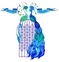 Couple peacocks ribbon with text blue design vector