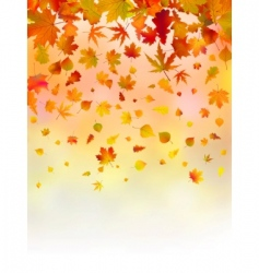 bright leaves of autumn card vector image vector image