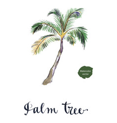coconut palm tree vector image