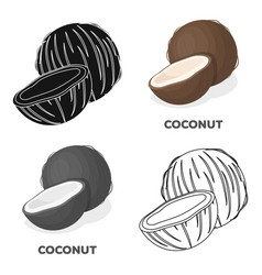 coconatdifferent kinds of nuts single icon in vector image