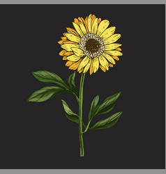 Hand drawn yellow daisy flower with stem vector