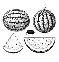 watermelon and slice drawing set isolated vector image vector image