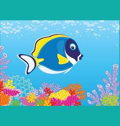 Blue surgeon fish on a coral reef vector