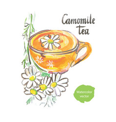 Camomile tea watercolor vector