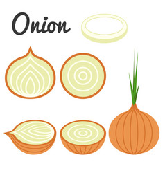 set of fruit and vegetable onion vector image vector image