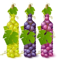 Vine grape bottles vector