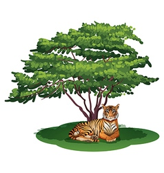 A tiger under the tree vector image vector image