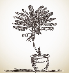 Sketch of small tree vector