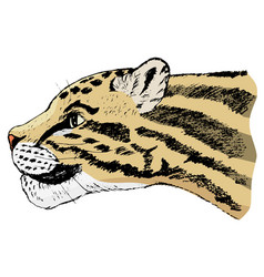sketch of clouded leopard vector image