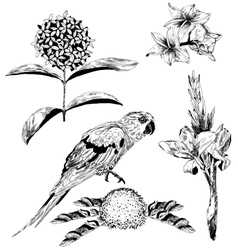 Tropical flowers and parrot for your design vector