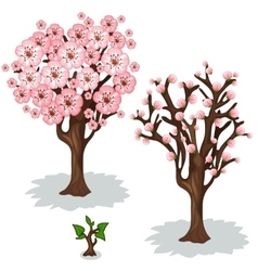 Cherry blooming stages of tree growth vector