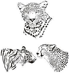 Head of cheetah leopard and tiger vector image