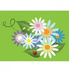 ladybird on flowers vector image vector image