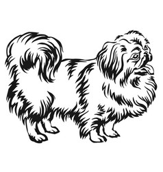 decorative standing portrait of dog pekingese vector image vector image