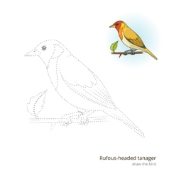 Rufous headed tanager draw vector image