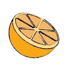 Drawing sliced orange juicy vector