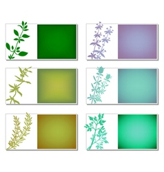 Aromatic herbs banners vector