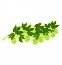 Hop branch vector