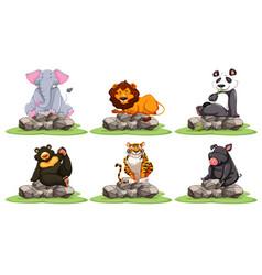 Different types of wild animals on rocks vector