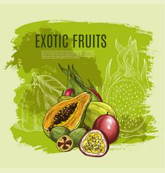 Exotic fruit sketch poster for food drink design vector