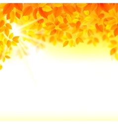 autumn decoration composition with season leaves vector image
