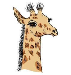 Cute giraffe cub vector