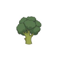 flat cartoon broccoli isolated vector image