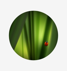 Fresh green grass and lovely red ladybug summer vector