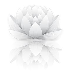 Grey lotus vector
