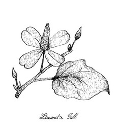 Hand drawn of lizard tail plant on white backgroun vector
