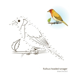 Rufous headed tanager draw vector image vector image