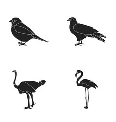 Sparrow and other species birds set collection vector