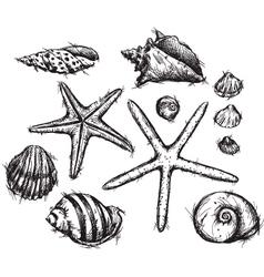 Selection of sea shells drawings vector
