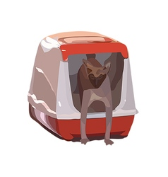 Cat breed sphynx comes out of the house-toilet vector