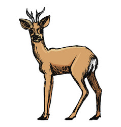 Roe deer forest animal vector
