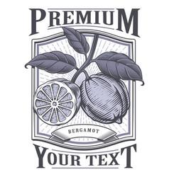 bergamot vintage label vector image