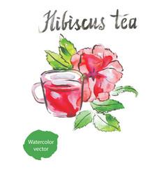 hibiscus tea watercolor vector image