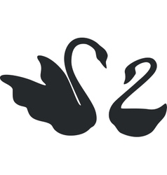 swan couple black 01 vector image