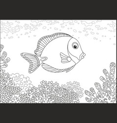 Surgeon fish on a coral reef vector
